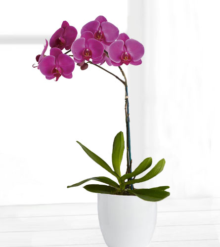 Purple Orchid Planter